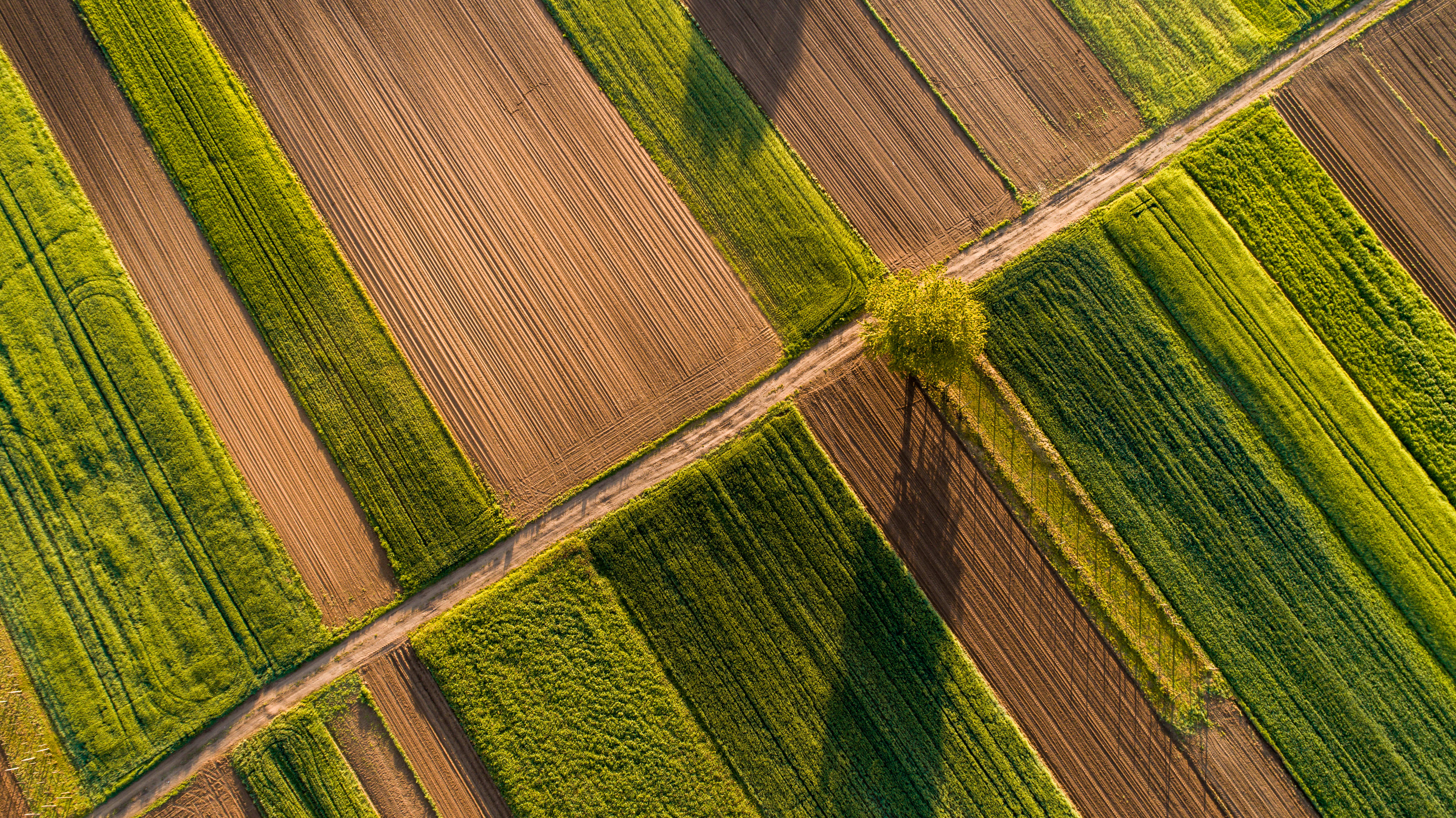 A farm field. Agriculture is one of the largest sources of U.S. methane emissions
